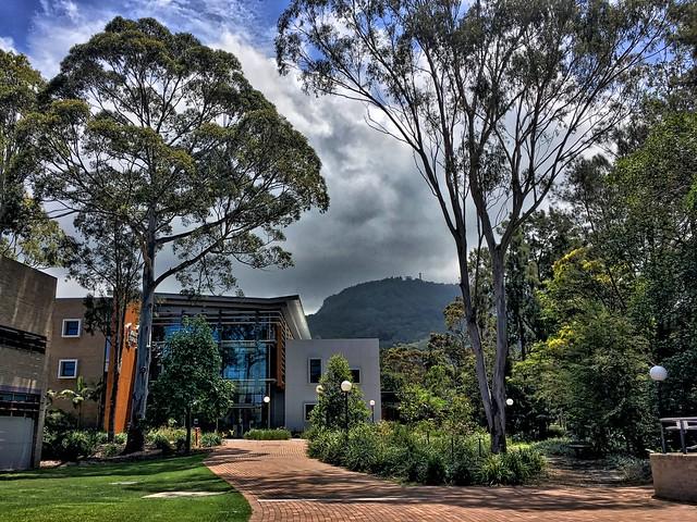 2017/365/332 Campus Under the Escarpment and Eucalyptus