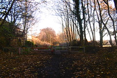 Former level crossing, Green Lane, Dodworth   (Silkstone - Wath old railway)    November 2017 (dave_attrill) Tags: greenlane dodworth great central railway electrified woodhead sheffield victoria manchester picadilly closed 1970 1955 stocksbridge engine transpennine upper don trail penistone wortley wadsley neepsend dunford thurgoland tunnel oxspring barnsley junction huddersfield allweather cycleway bridleway footpath remains silkstone 2016 1981 dove valley november 2017 dovevalleytrail worsbrough worsbroughbranch
