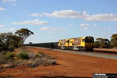 18 November 2017 ACN4169 ACN4172 7762 empty Karara Canna (RailWA) Tags: railwa philmelling aurizon midwest acn4169 acn4172 7762 empty karara canna