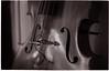 (- Mathias Rodriguez -) Tags: leica m6 ilford hp5 7artisans 50mm f11 doublebass standup bass instrument