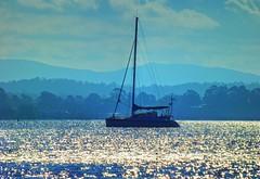 Crazy sparkles III (elphweb) Tags: hdr highdynamicrange nsw australia coast coastal seaside yacht boat sailer sparkles water ocean sea bay sparkly waterway peace peaceful serene serenity creek