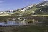 pascolo montano (G@Bon@z) Tags: abruzzo laquila viaggi