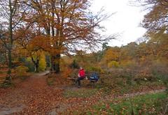 Surrounded by autumn colours (Elisa1880) Tags: maarn utrecht nederland netherlands autumn herfst trees bomen elisa regenpak doorn
