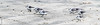 Langeoog --854769 (clickraa) Tags: langeoog nordsee brandung knutt