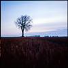 Harvested - Ektachrome 100 exp* (magnus.joensson) Tags: sweden skåne söderslätt fjädringslöv autumn sunrise september rolleiflex 35 zeiss tessar 75mm kodak ektachrome 100 exp 2005 c41 6x6 medium format tree countryside