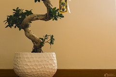 myZEN (antoniomolitierno) Tags: momento zen casa rilassamento pace albero vaso ceramica legno foglie foglia tronco parque ficus bonsai relax ginseng moment home relaxation peace tree jar ceramic wood leaves leaf trunk rubber plant atmosfera atmosphere mood umore green vision canon eos 760d 18135