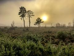 Heathland fog (Foto_Art_) Tags: apple iphone 7