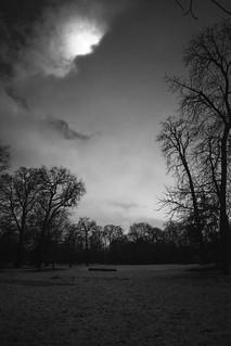 Le bois noir