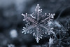 Snowflake n° 3 - Winter 2017-2018 - Switzerland (Rogg4n) Tags: macro realmacro snow snowflake flocondeneige white extensiontubes kenko efs60mmf28macrousm winter hiver bokeh nature symetry pattern crystal chauxdefonds switzerland 2016 ice cold wonderland wool scarf closeup season quiet black jewel dendrite purple canoneos80d blue