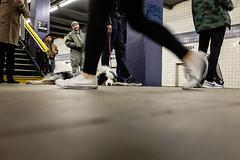 untitled-25-2 (Runs With Scissors) Tags: nyc x100t ©kensasteinphotogrpahy dog subwayplatform subway mta