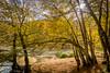 Yedigöller (Kalem ve Mum) Tags: sonbahar autumn fall nature doğa yellow sarı forest orman yedigöller