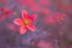 enjoy winter (christophe.laigle) Tags: flower fuji christophelaigle fleur macro xpro2 xf60mm nature