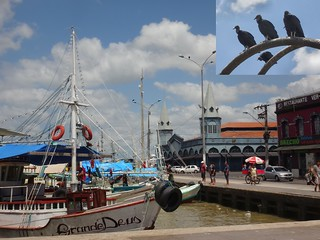 Psalms 103,5. Belém Fishing Harbor, the Market, and Black Vultures, Coragyps atratus, Belém, Brazil