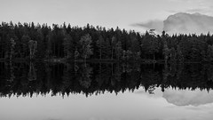 Reflection (Stefano Rugolo) Tags: stefanorugolo pentax k5 smcpentaxda1855mmf3556alwr reflection sky cloud monochrome landscape forest tree water lakeside lake layers hälsingland sweden sverige wood