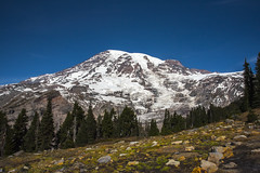 Mt. Rainier from Deadhorse Trail (wplynn) Tags: mtrainiernationalpark mountrainiernationalpark mtrainier mountrainier mt mount mountain rainier volcano volcanic washington state cascade cascaderange deadhorsetrail