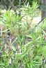 DSC_0329 (Andy961) Tags: ireland cork blarneycastle garden gardens oleander