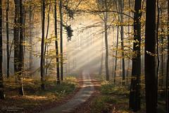 Enter the forest (Rita Eberle-Wessner) Tags: forest wald woods nebel fog waldweg foresttrail bäume trees sonnenstrahlen sunrays sunbeams schattenstrahlen tyndalleffect laub leaves laubwald odenwald flickrdiamond