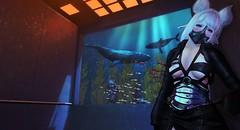 Below.. (.❤.ρµmþkïñ.❤.) Tags: ocean whale deepblue blue sea underthesea secondlife anime elevator seagrass