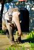 Rasukumaru, Male Asian Elephant (Dakiny) Tags: 2017 autumn october japan kanagawa yokohama asahiward park city street outdoor zoo yokohamazoologicalgardens zoorasia creature animal mammal nikon d750 sigma apo 70200mm f28 apo70200mmf28exdgoshsm sigmaapo70200mmf28exdgoshsm nikonclubit