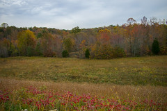 untitled-3.jpg (dzmears) Tags: landscape peaceful woods day overcast fall orange red trees colorful forest pretty leaves green park yellow clouds field