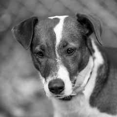 Maggie03Dec201752-Edit.jpg (fredstrobel) Tags: dogs pawsatanta phototype atlanta blackandwhite usa animals ga pets places pawsdogs decatur georgia unitedstates us