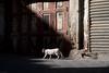 Cat and The Door (siraf72) Tags: the door cat manama bahrain