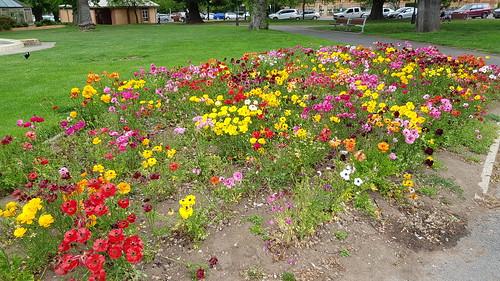 Belmore Park in Goulburn