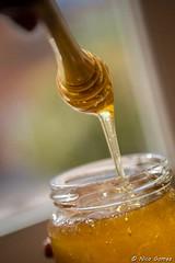 D013-©N.GOMEZ_Maison-du-Terroir-BD-copyright (roquebrunesurargens_lesissambres) Tags: agriculteur apiculture miel nicogomez officedetourismeroquebrunesurargens roquebrunesurargens