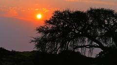 im Gegenlicht (marionkaminski) Tags: sunset namibia afrika africa tree arbre arbol gegenlicht landscape paisaje paysage sky panasonic lumixfz1000 coucherdusoleil puestadelsol