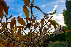 IMG_0209 (Jagwat) Tags: canon 700d photography dslr garden