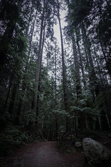 Trail (RomainL_CA) Tags: vancouver bc canada vancity british coloumbia raincouver autumn 2017 forest tree pine leave leaf trail hike north water blue rice lake lynn valley calm landscape wood cloud cloudy
