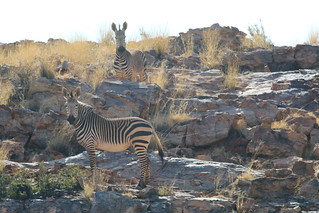 South Africa Luxury Hunting Safari -  Northern Cape 1