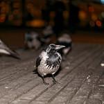 Alexanderplatz hoodies 2017-11-30 [1/5] thumbnail