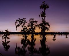 Bayou Dreams (carolina_sky) Tags: breauxbridge louisiana unitedstates us cypress bayou swamp tree bluehour silhouette reflection sunset purple orange glow backlight pentax2470mm pentaxk1 pixelshift landscape lake skymatthewsphotography