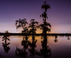 Bayou Dreams (carolina_sky) Tags: breauxbridge louisiana unitedstates us cypress bayou swamp tree bluehour silhouette reflection sunset purple orange glow backlight pentax2470mm pentaxk1 pixelshift landscape lake skymatthewsphotography