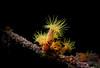 Yellow Sun Coral (stuartgibbons95) Tags: coral sea underwater