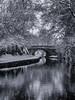 Wintry Canal (Fin Wright) Tags: ianwright 2017 blip finwrightphotographycouk ian fin finwrightphotography finwright canal llangollen llangollencanal ellesmere shropshire winter snow ice bridge water shropshireunion mono