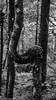 Crooked (McMac70) Tags: blackandwhite fall jahreszeiten natur nature outdoor pflanze plant schnee schwarzweis tree winter area bark black branch covered flora forest land leaf monochromephotography noperson oak old outdoors park photography sitting snow standing trunk wood wooded woodland woodyplant
