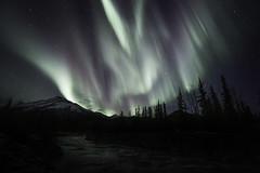 Aurora Borealis (from our cabin) (www.studebakerstudio.com) Tags: auroraborealis aurora alas alaska landscape night northernlights