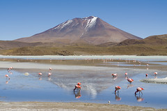 Laguna hedionda (Uyuni, Bolivia) (My Wave Pics) Tags: bolivia altiplano laguna flamingos landscape lagunahedionda water lake pink sky sea reflection mountain ecoregion hill plateau reservoir lagoon highland flamingo tourism wilderness tide reserve high hedionda andean