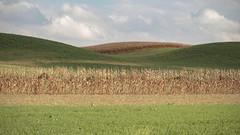 Beauty Lives Here (TuthFaree) Tags: landscape ohio corn farm agriculture harvest rural line shape amish 7dwf