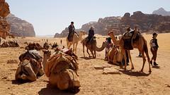 JORDANIA (Grace R.C.) Tags: jordania desierto desert animal camel camello wadirum gente people