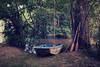 EL BOTE (Juan Montiel) Tags: boat travel turismo wood forest water tree argentina paisaje landscape river rio remo rowing green verde isla island delta