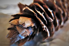 HMM ~ Frayed Pinecone (karma (Karen)) Tags: macros pinecones texture macromondays hmm rhymeswithstone topf25