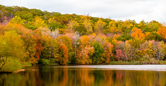 Fall in Connecticut (alex_shim) Tags: beautiful colors fall yellow orange autumn leafs changing red green fuji fujixt2 nature tree trees sun sunset