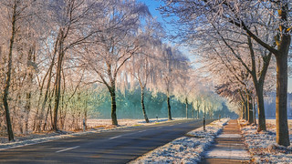 The way to the winter