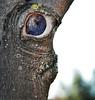 l'occhione (sharkoman) Tags: occhio profilo faccia pareidolia