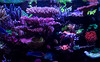 8A0A9330 (ct_purley) Tags: canon 5d mark iv aac advanced aquarium consultancy reef tank saltwater corals sps small polyped stony