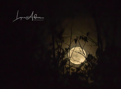 Claire's Moon (benemme) Tags: supermoon spooky nightsky nikond7200 handheld lunar moon