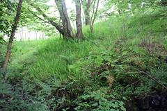 IMG_3139 (avsfan1321) Tags: connemaranationalpark connemara nationalpark ireland countygalway green lush landscape plants